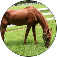 Rescue horse Charger saved with help from Wellpride fish oil
