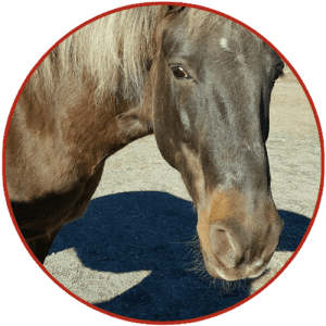 Wellpride equine fish oil supplement for hooves