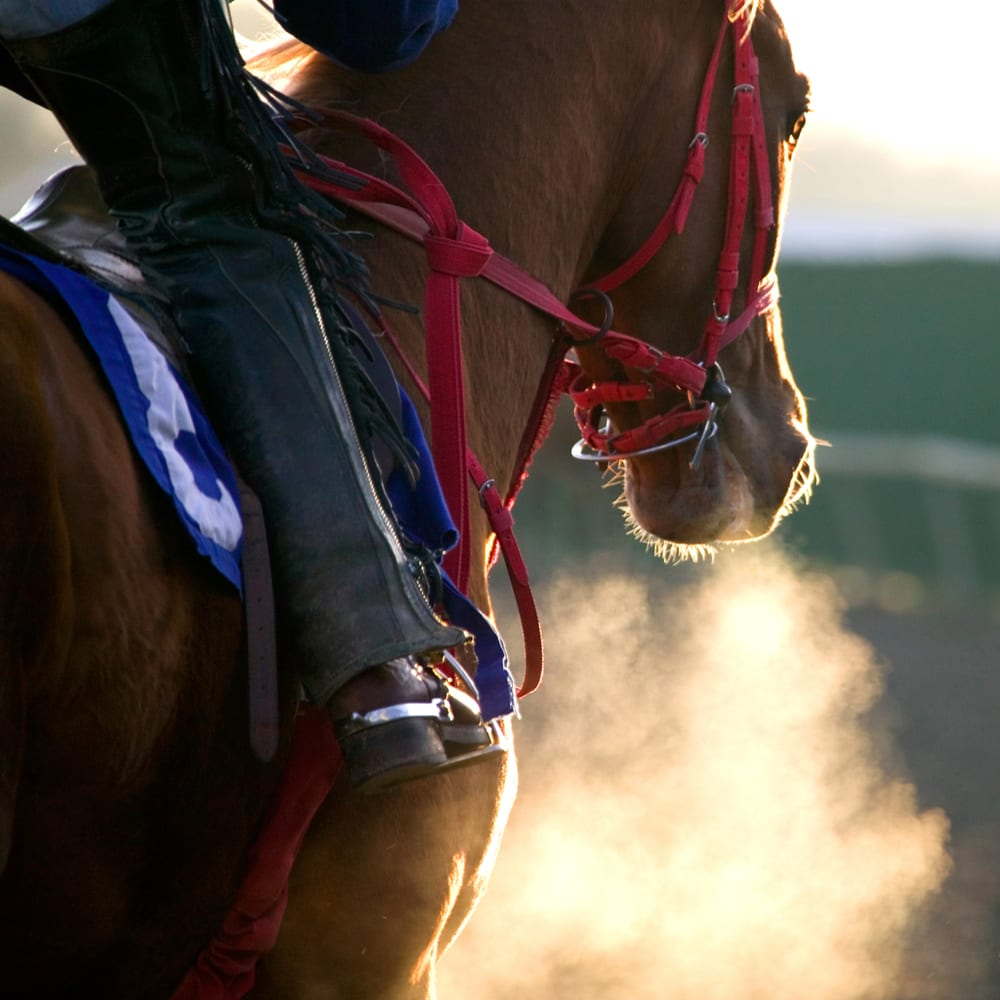 Omega-3 for horses with heaves